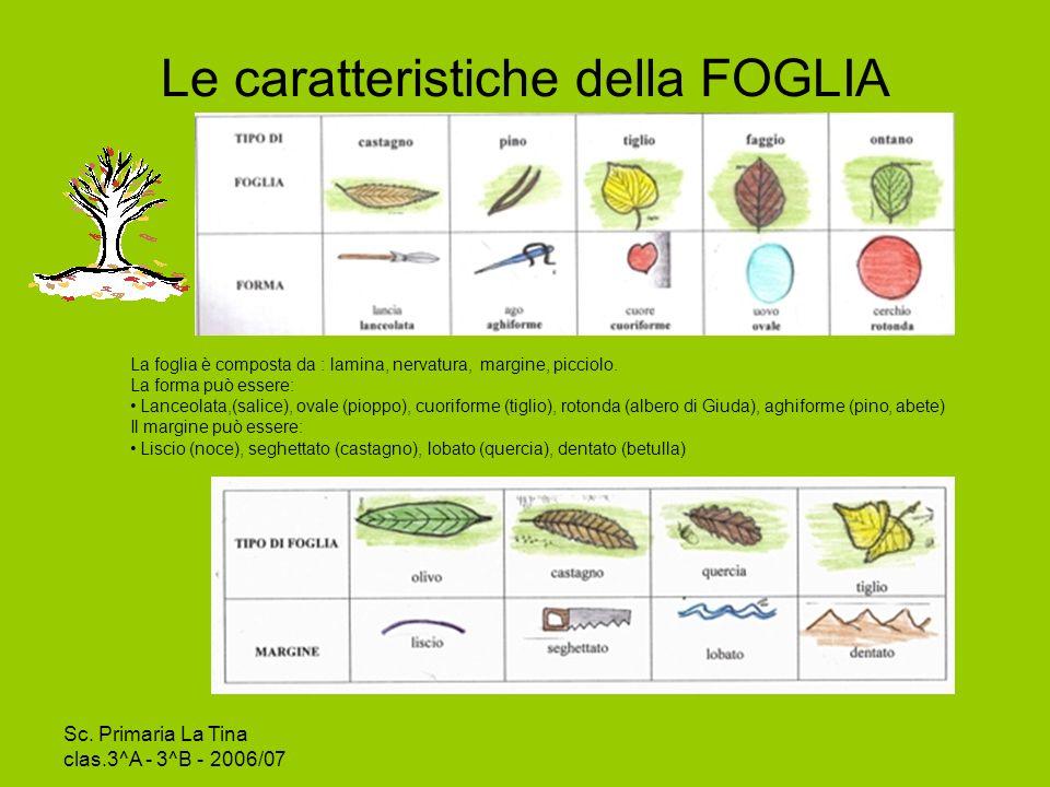 Le caratteristiche della FOGLIA
