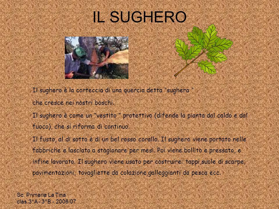 IL SUGHERO Il sughero è la corteccia di una quercia detta sughera