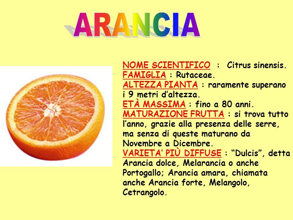 ARANCIA NOME SCIENTIFICO : Citrus sinensis. FAMIGLIA : Rutaceae.