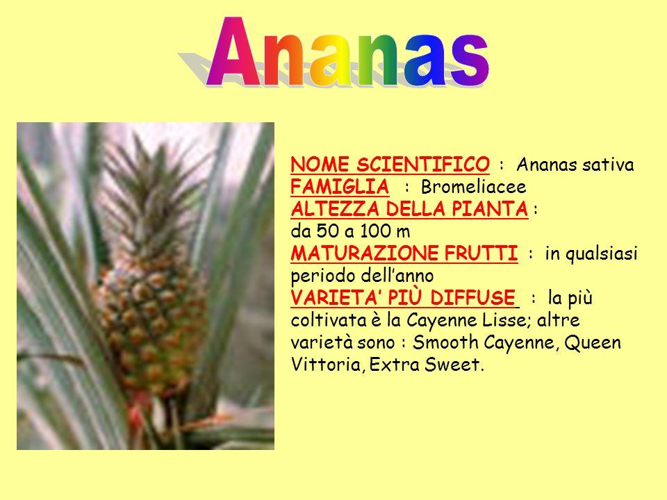 Ananas NOME SCIENTIFICO : Ananas sativa FAMIGLIA : Bromeliacee