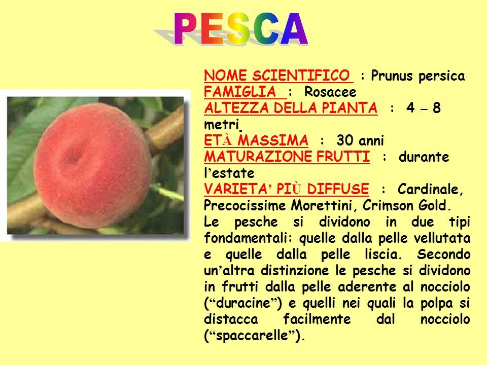 PESCA NOME SCIENTIFICO : Prunus persica FAMIGLIA : Rosacee ALTEZZA DELLA PIANTA : 4 – 8 metri