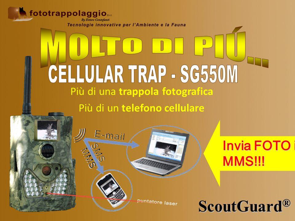 MOLTO DI PIÚ… ScoutGuard® CELLULAR TRAP - SG550M Invia FOTO in MMS!!!