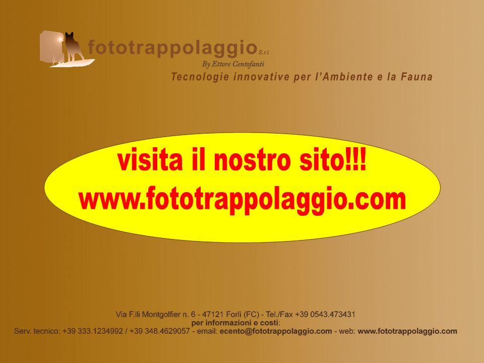 visita il nostro sito!!! www.fototrappolaggio.com