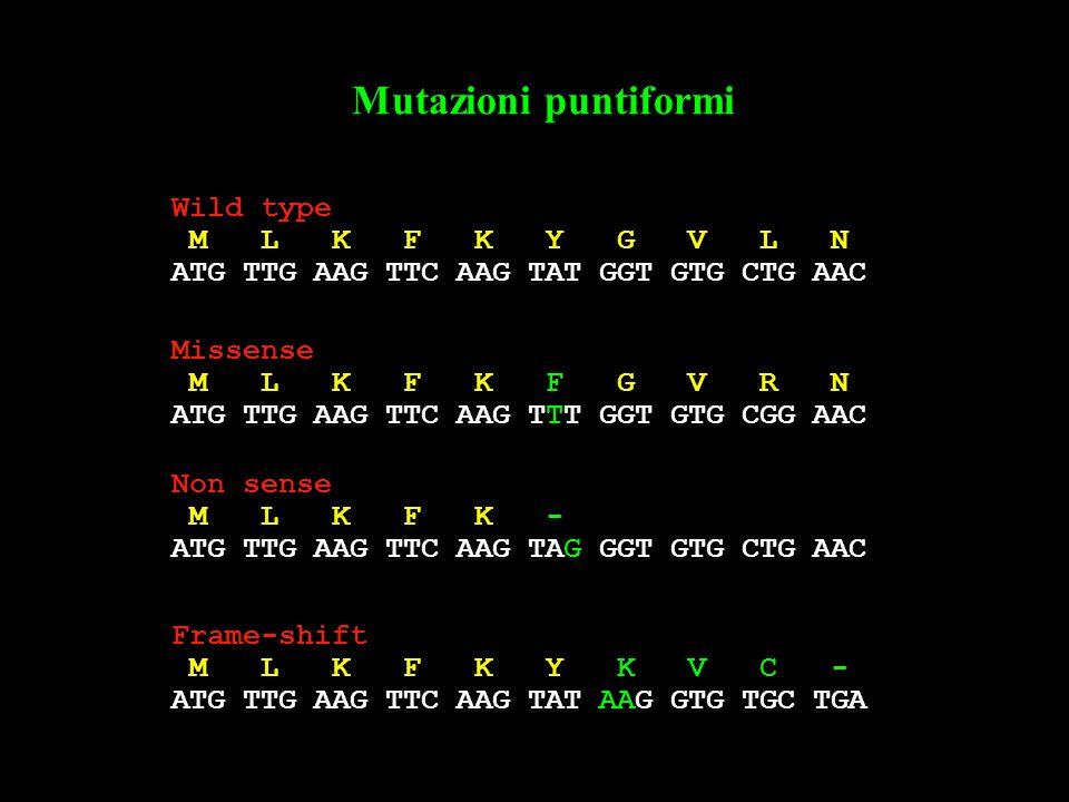 Mutazioni puntiformi Wild type M L K F K Y G V L N