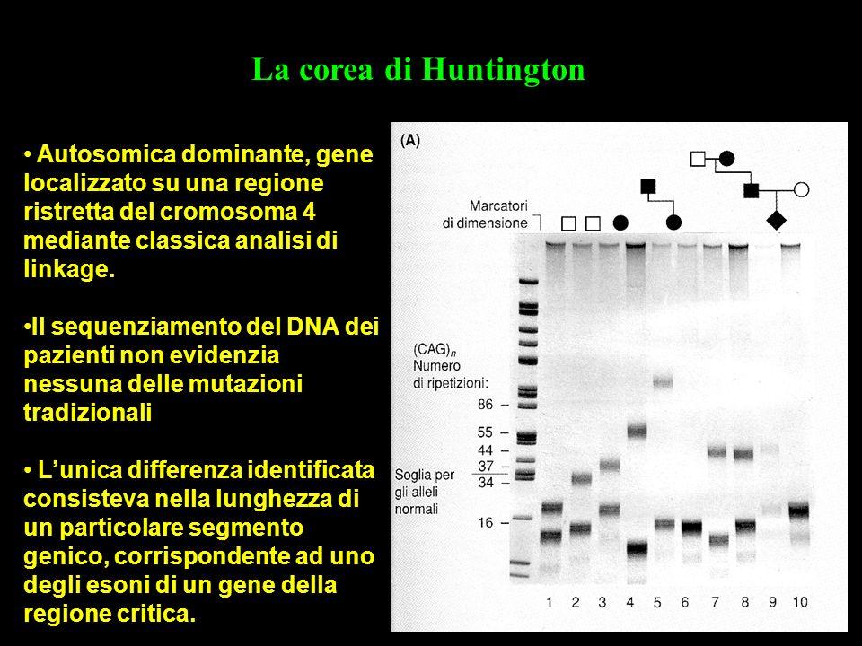 La corea di Huntington Autosomica dominante, gene localizzato su una regione ristretta del cromosoma 4 mediante classica analisi di linkage.