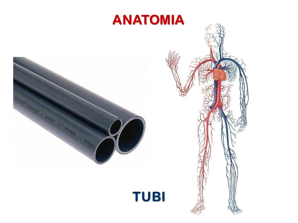 ANATOMIA TUBI