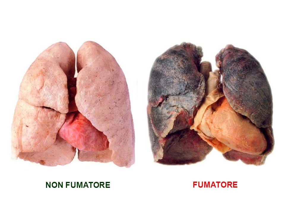 NON FUMATORE FUMATORE