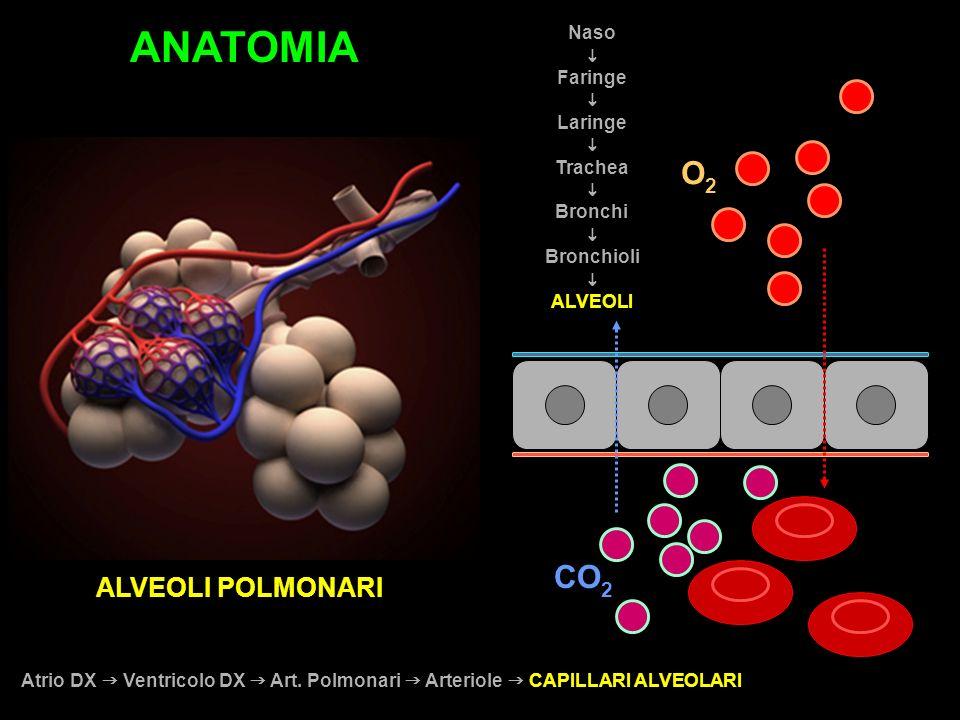 ANATOMIA O2 CO2 ALVEOLI POLMONARI Naso i Faringe Laringe Trachea