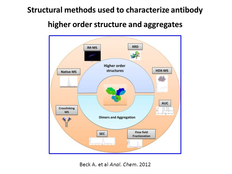 Structural methods used to characterize antibody higher order structure and aggregates