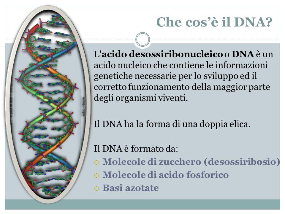 Che cos'è il DNA
