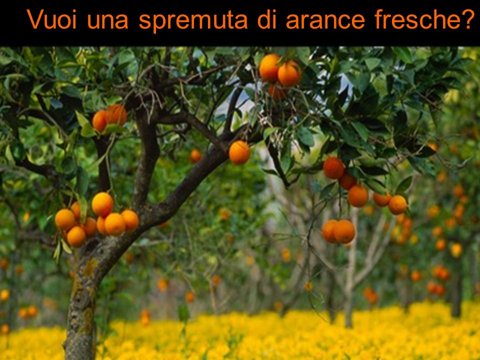 Vuoi una spremuta di arance fresche