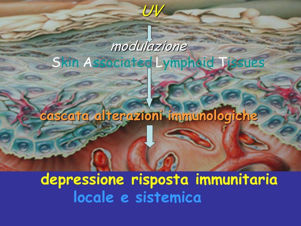 modulazione Skin Associated Lymphoid Tissues