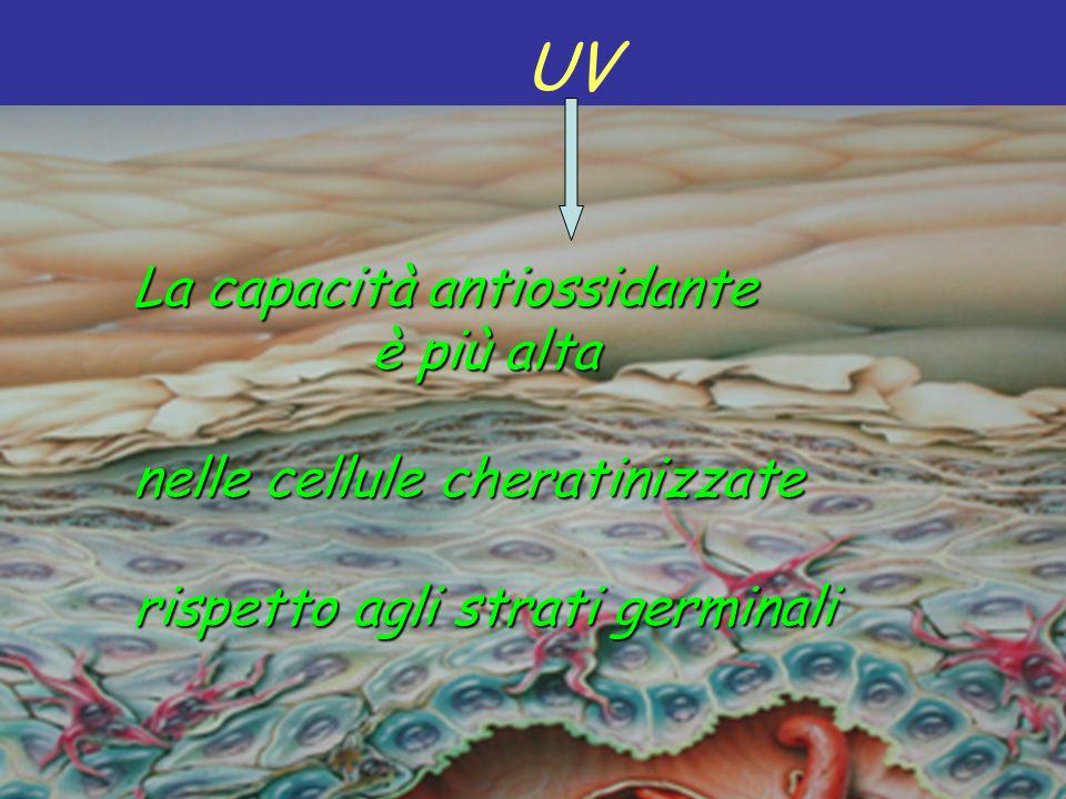 UV La capacità antiossidante è più alta nelle cellule cheratinizzate