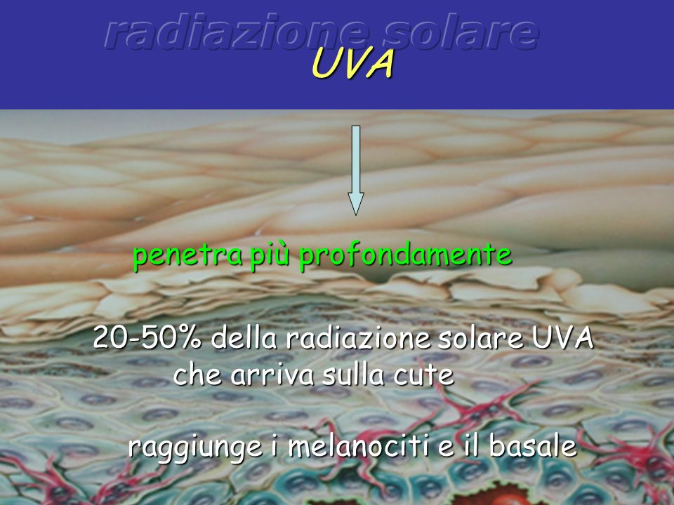 radiazione solare UVA. penetra più profondamente. 20-50% della radiazione solare UVA che arriva sulla cute.