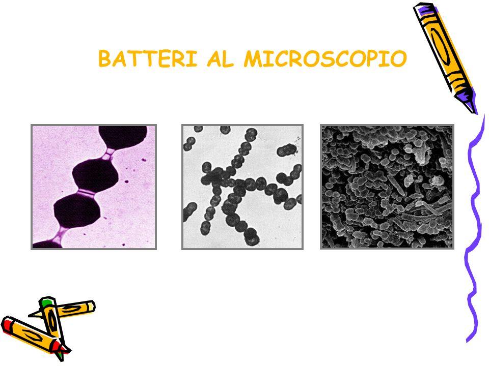 BATTERI AL MICROSCOPIO