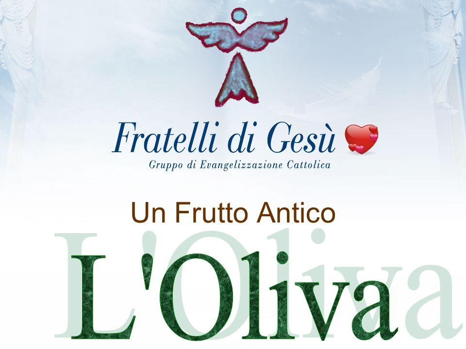 Un Frutto Antico L Oliva