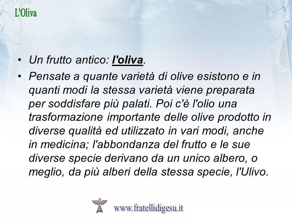 Un frutto antico: l oliva.