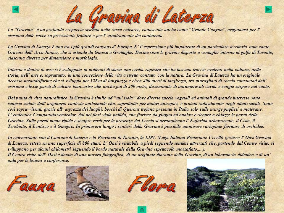 La Gravina di Laterza Fauna Flora