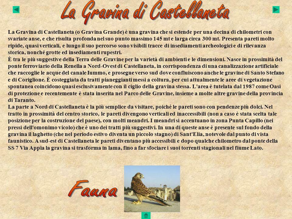 La Gravina di Castellaneta
