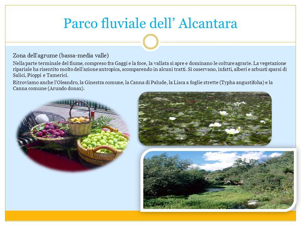 Parco fluviale dell' Alcantara