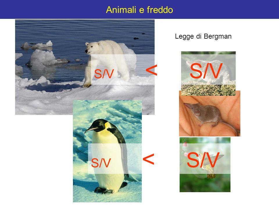 Animali e freddo Legge di Bergman S/V < S/V S/V < S/V