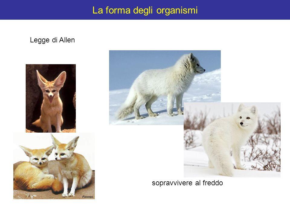La forma degli organismi