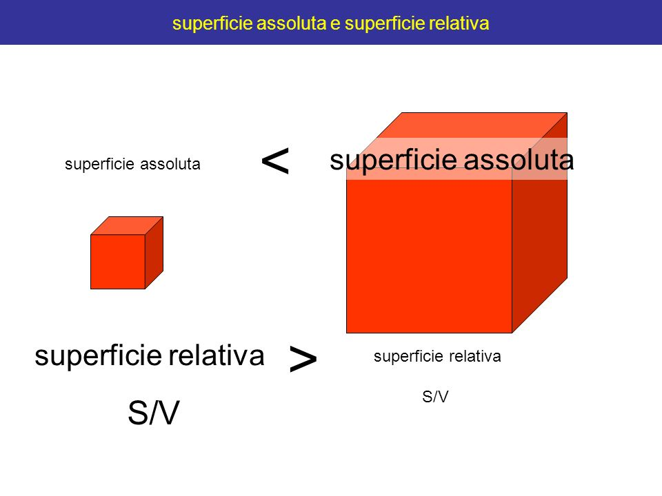 superficie assoluta e superficie relativa