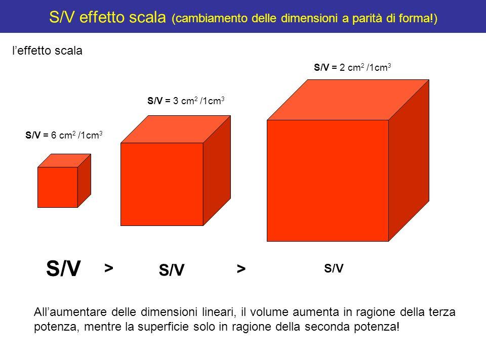 S/V effetto scala (cambiamento delle dimensioni a parità di forma!)