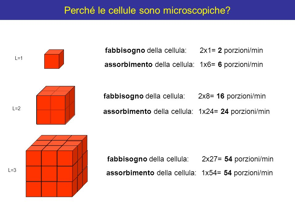 Perché le cellule sono microscopiche