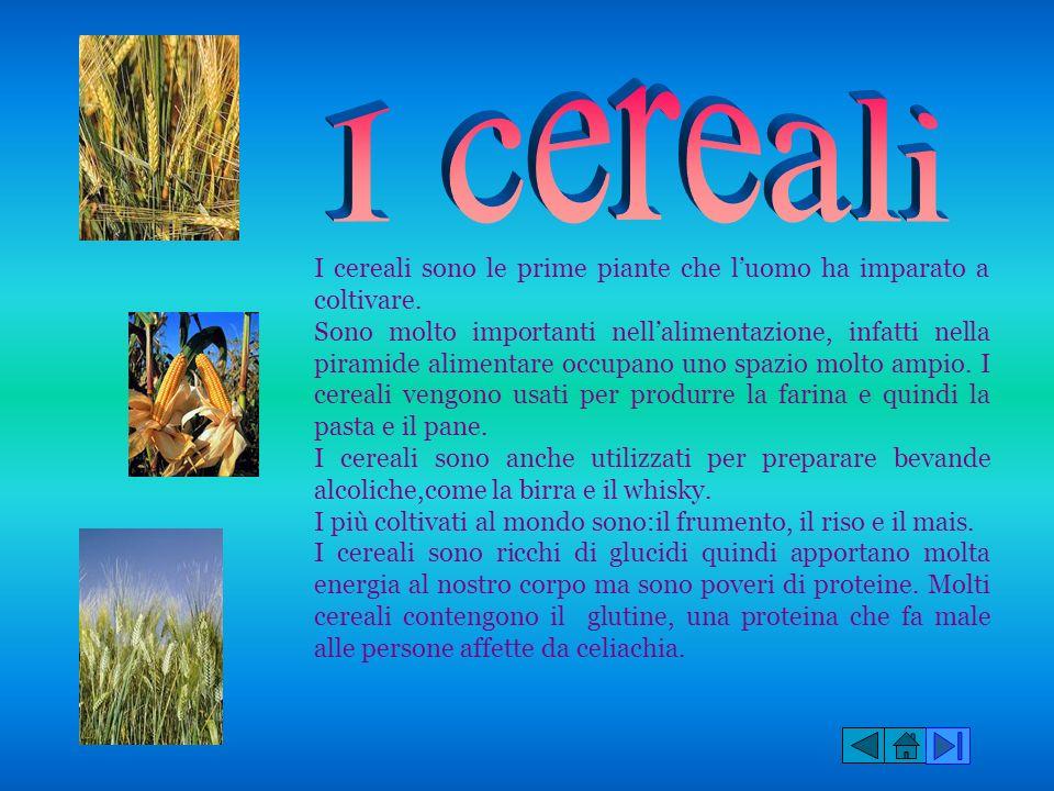 I cereali I cereali sono le prime piante che l'uomo ha imparato a coltivare.
