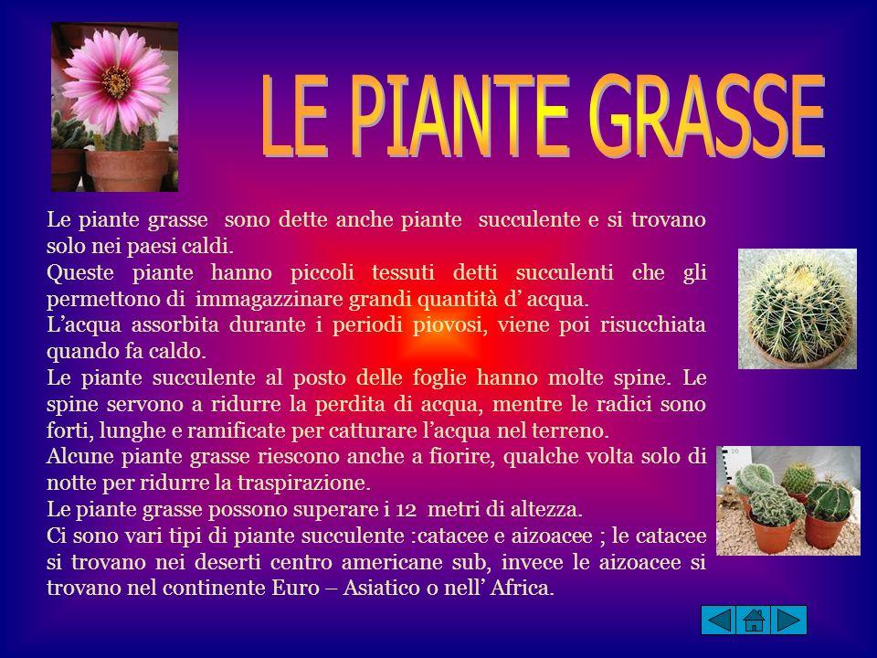LE PIANTE GRASSE Le piante grasse sono dette anche piante succulente e si trovano solo nei paesi caldi.