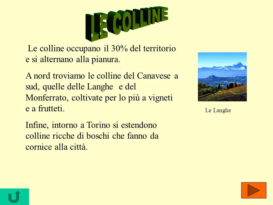 LE COLLINE Le colline occupano il 30% del territorio e si alternano alla pianura.