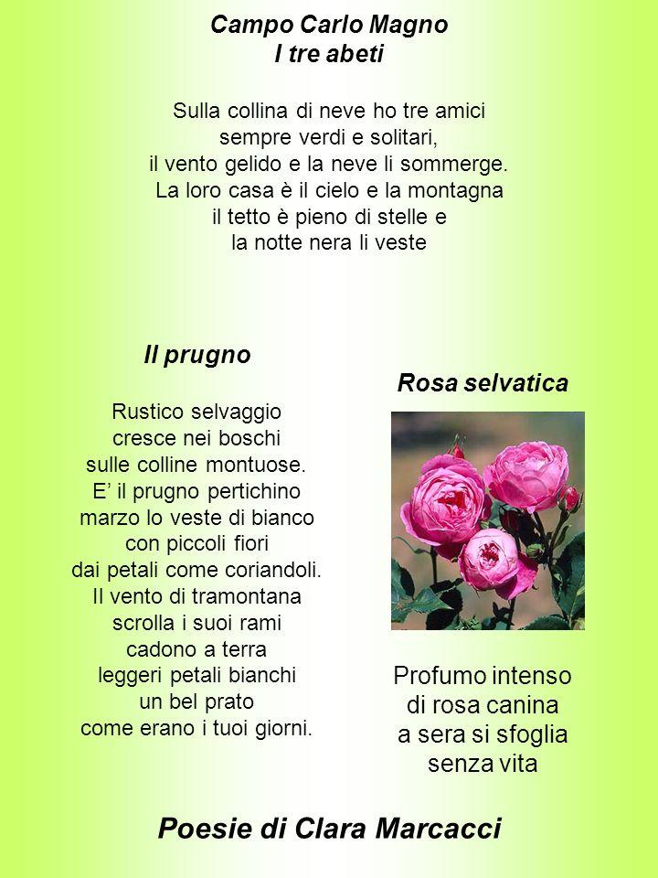 Poesie di Clara Marcacci