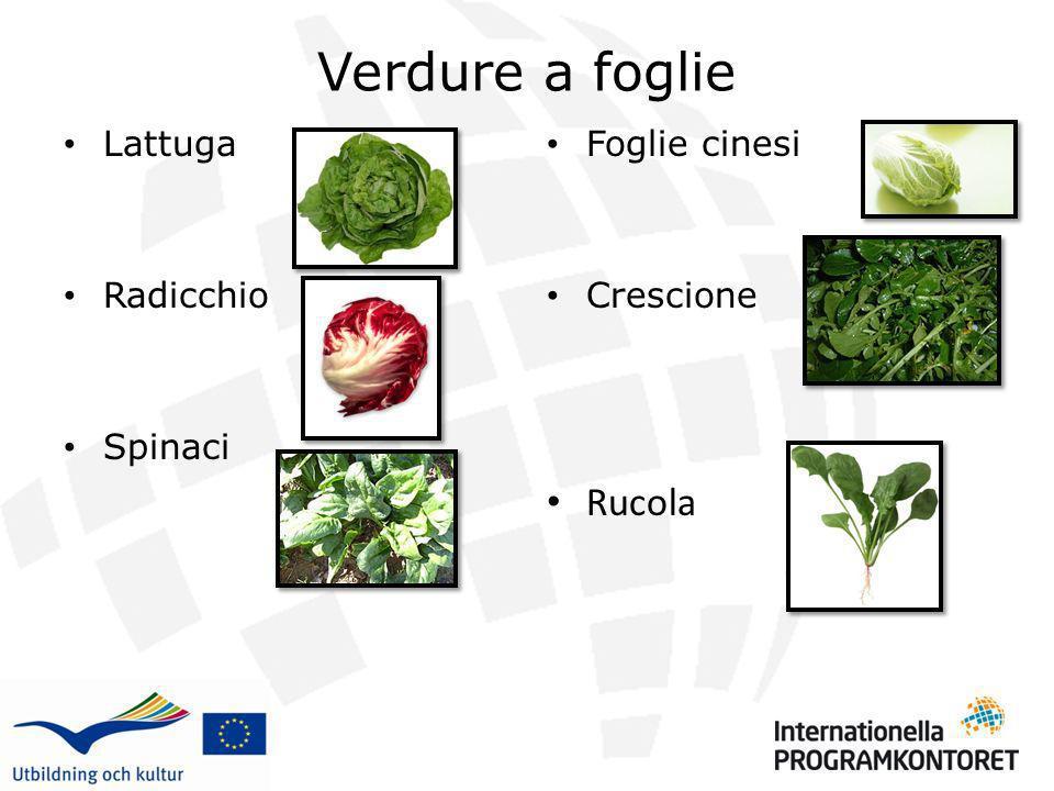 Verdure a foglie Rucola Lattuga Radicchio Spinaci Foglie cinesi