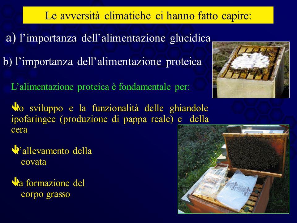 a) l'importanza dell'alimentazione glucidica