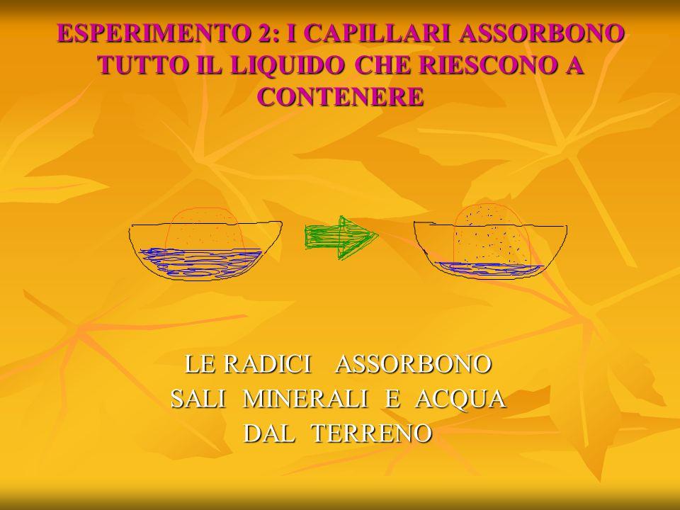 ESPERIMENTO 2: I CAPILLARI ASSORBONO TUTTO IL LIQUIDO CHE RIESCONO A CONTENERE