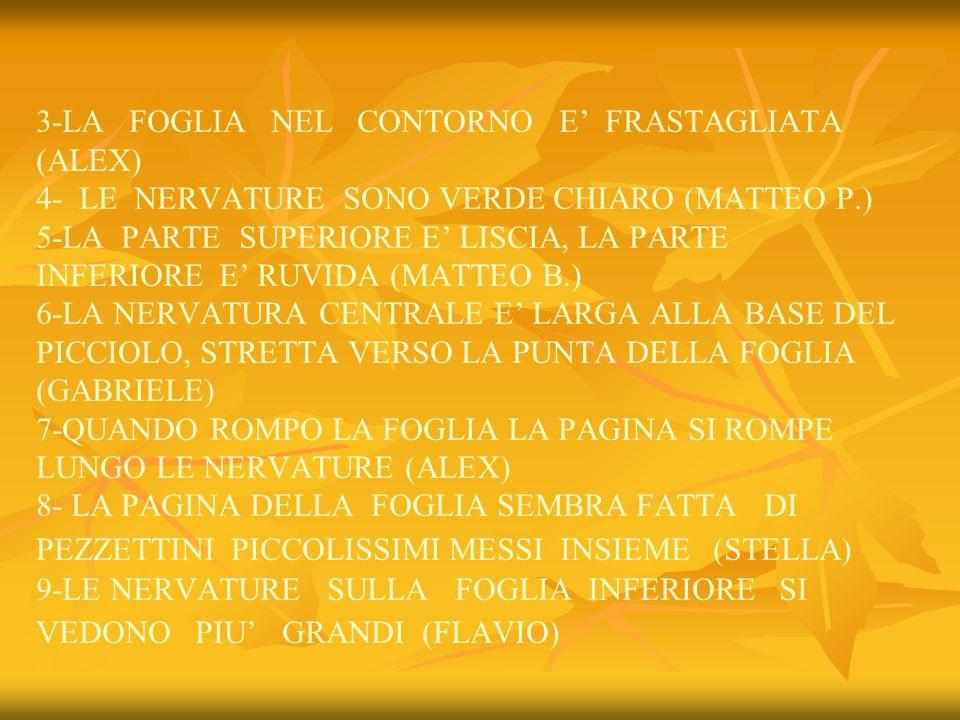 3-LA FOGLIA NEL CONTORNO E' FRASTAGLIATA (ALEX) 4- LE NERVATURE SONO VERDE CHIARO (MATTEO P.) 5-LA PARTE SUPERIORE E' LISCIA, LA PARTE INFERIORE E' RUVIDA (MATTEO B.) 6-LA NERVATURA CENTRALE E' LARGA ALLA BASE DEL PICCIOLO, STRETTA VERSO LA PUNTA DELLA FOGLIA (GABRIELE) 7-QUANDO ROMPO LA FOGLIA LA PAGINA SI ROMPE LUNGO LE NERVATURE (ALEX) 8- LA PAGINA DELLA FOGLIA SEMBRA FATTA DI PEZZETTINI PICCOLISSIMI MESSI INSIEME (STELLA) 9-LE NERVATURE SULLA FOGLIA INFERIORE SI VEDONO PIU' GRANDI (FLAVIO)