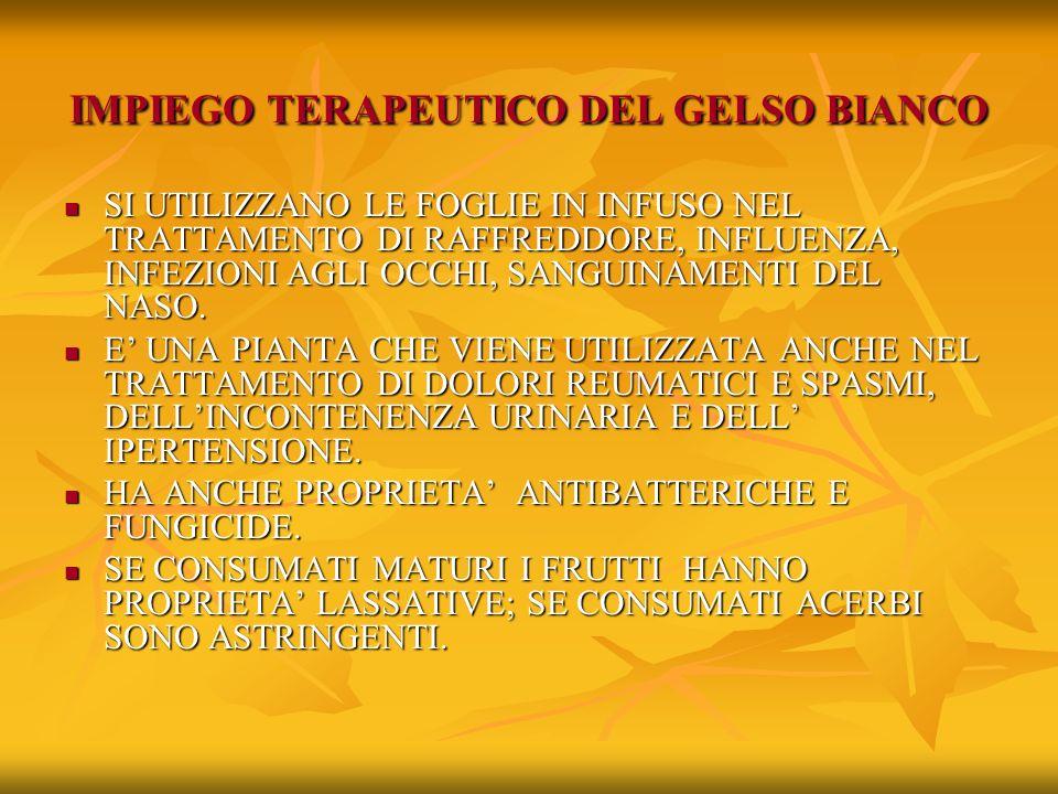 IMPIEGO TERAPEUTICO DEL GELSO BIANCO
