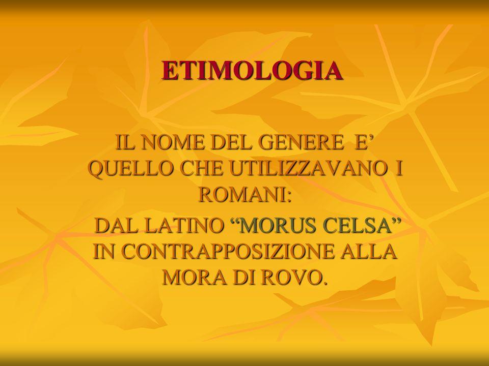 ETIMOLOGIA IL NOME DEL GENERE E' QUELLO CHE UTILIZZAVANO I ROMANI: