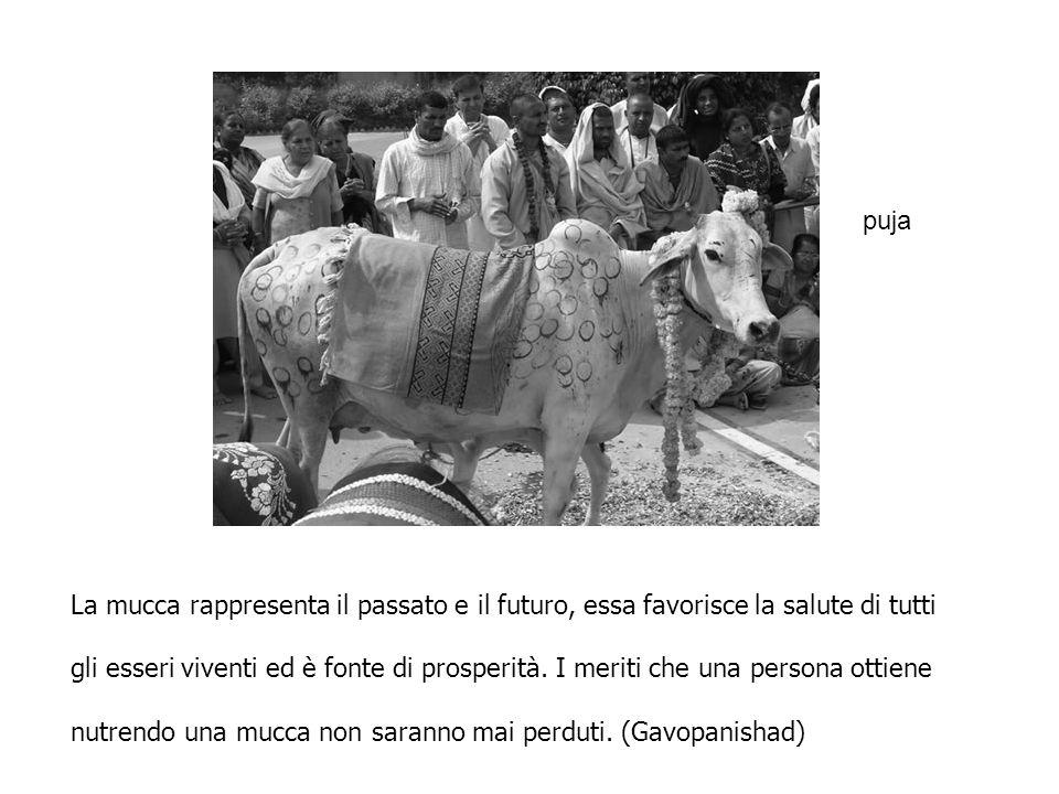 puja La mucca rappresenta il passato e il futuro, essa favorisce la salute di tutti.