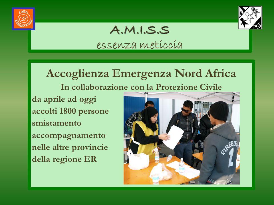 A.M.I.S.S essenza meticcia