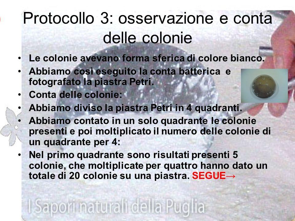 Protocollo 3: osservazione e conta delle colonie