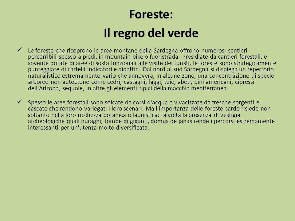 Foreste: Il regno del verde