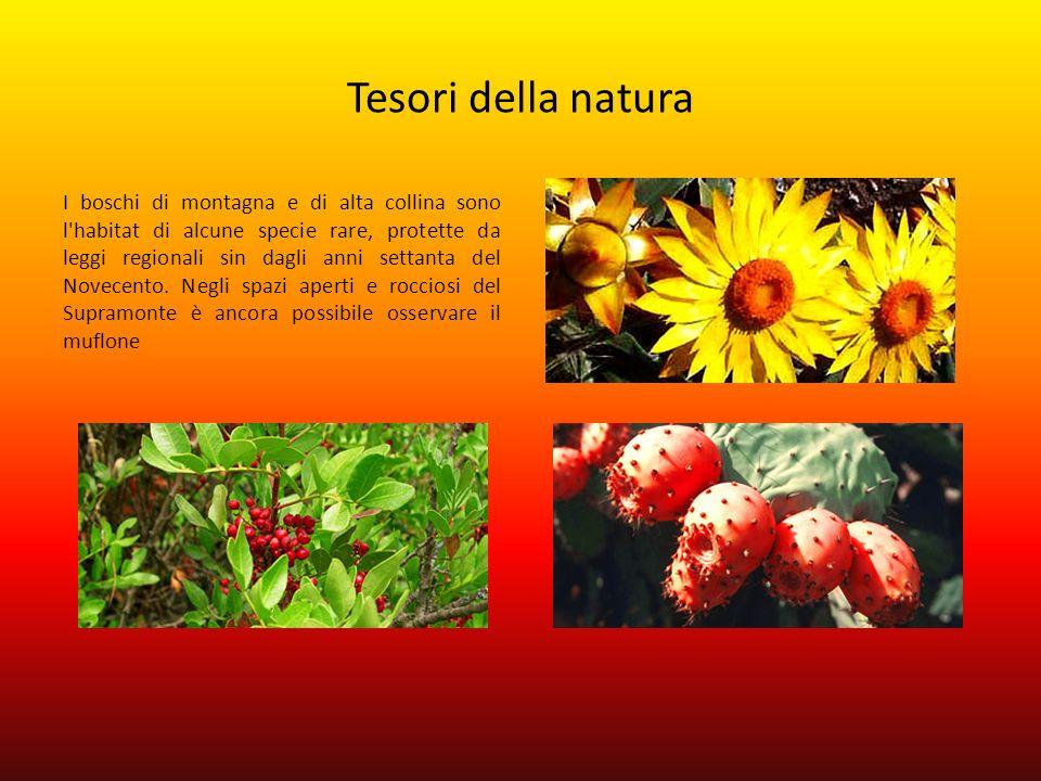Tesori della natura