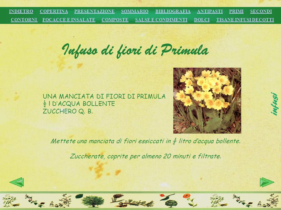 Infuso di fiori di Primula