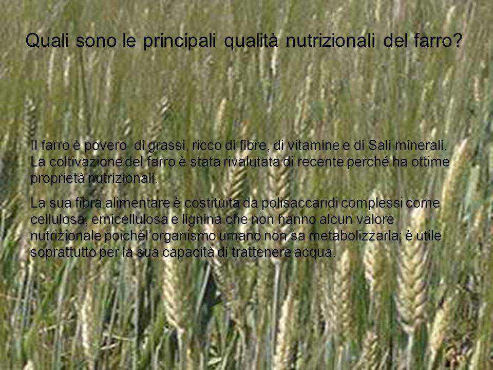 Quali sono le principali qualità nutrizionali del farro