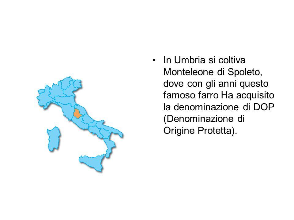In Umbria si coltiva Monteleone di Spoleto, dove con gli anni questo famoso farro Ha acquisito la denominazione di DOP (Denominazione di Origine Protetta).