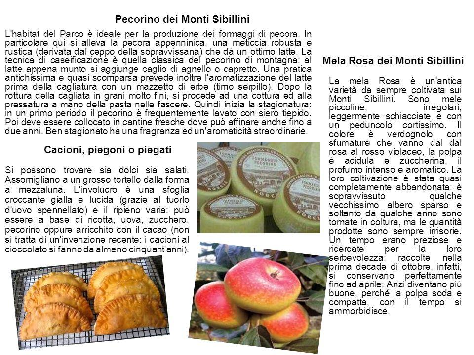 Mela Rosa dei Monti Sibillini Cacioni, piegoni o piegati