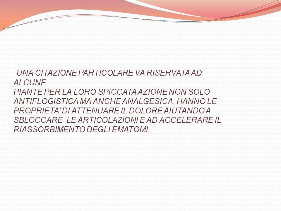 UNA CITAZIONE PARTICOLARE VA RISERVATA AD ALCUNE PIANTE PER LA LORO SPICCATA AZIONE NON SOLO ANTIFLOGISTICA MA ANCHE ANALGESICA; HANNO LE PROPRIETA DI ATTENUARE IL DOLORE AIUTANDO A SBLOCCARE LE ARTICOLAZIONI E AD ACCELERARE IL RIASSORBIMENTO DEGLI EMATOMI.