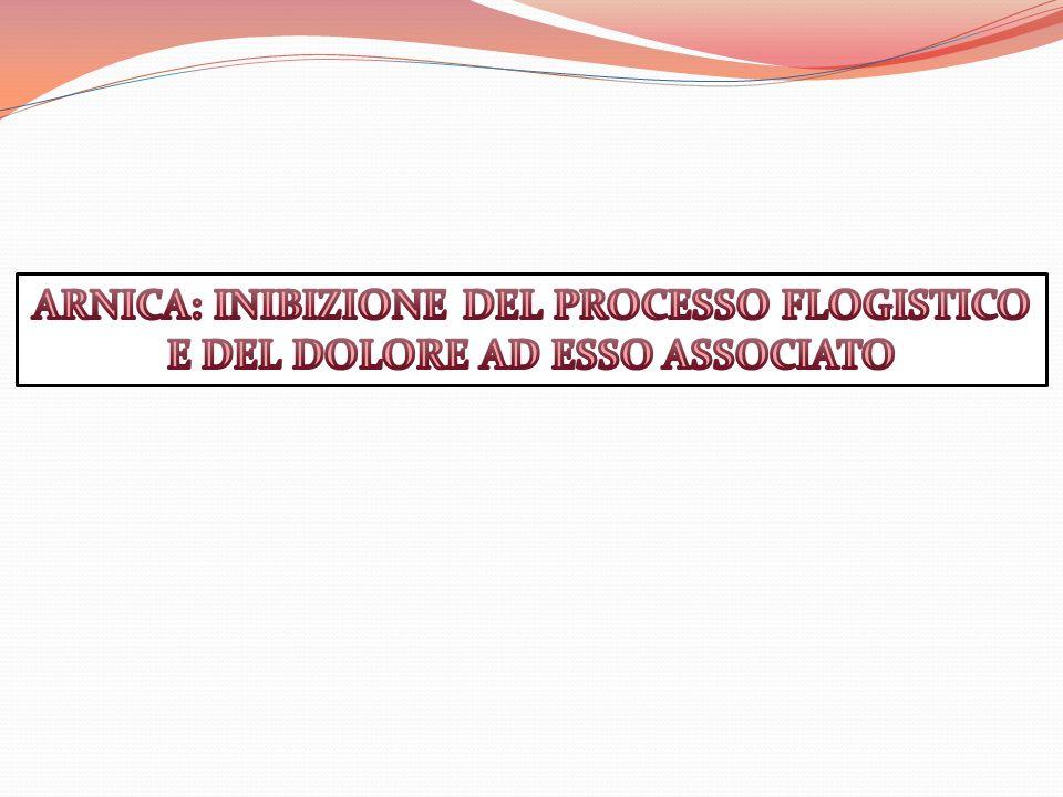 ARNICA: INIBIZIONE DEL PROCESSO FLOGISTICO